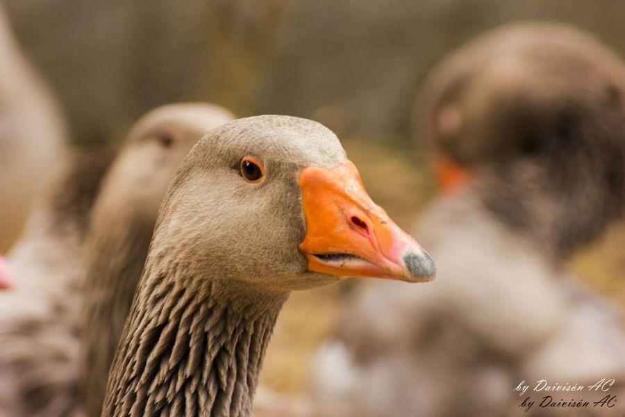 Miradas V / Glances V.... EyeEm Best Shots EyeEm Birds Streamzoofamily Eyeem Fauna