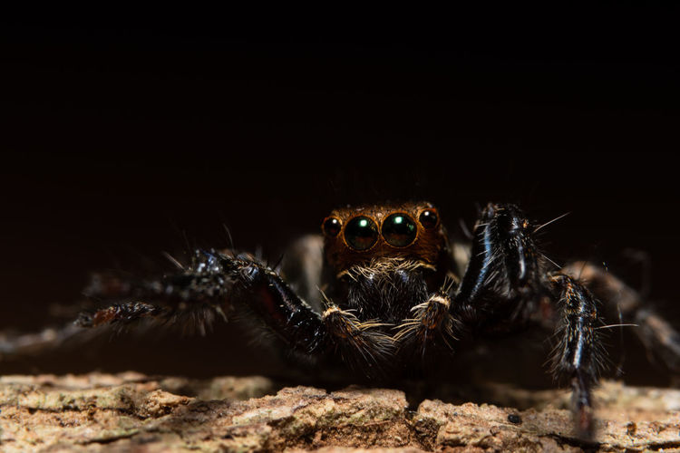 Close-up of jumping spider on tree trunk