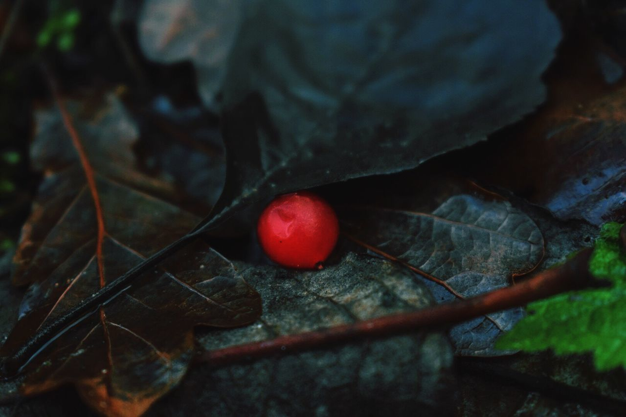 fruit, red, food and drink, leaf, nature, healthy eating, food, outdoors, no people, freshness, growth, tree, day, close-up, beauty in nature, branch