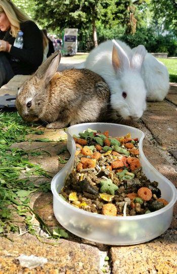 Rabbits Rabbit Food