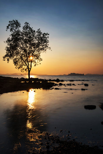 Silhouette tree on shore against sky during sunset