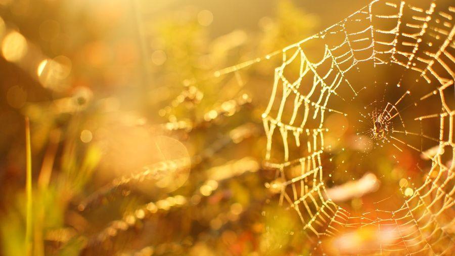 Showcase April Sunshine spider First Eyeem Photo