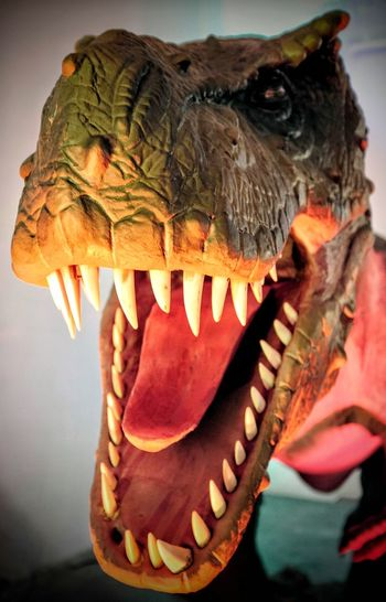 Nebraska State Fair - Grand Island, Nebraska August 2016 Apex Predator Camera Work Check This Out Close-up Color Photography Dinosaur Events EyeEm Best Edits EyeEm Gallery Hungry Learning Menace Missing Tooth Mouth Nebraska Paleontology Photojournalism Predator Scary Face Science State Fair Teeth Tyrannosaurus Vicious Walking With Dinosaurs