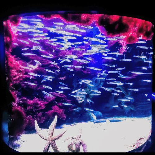 mundo encapsulado Sea Fish Aquarium Seastars Fish Tank Underwater