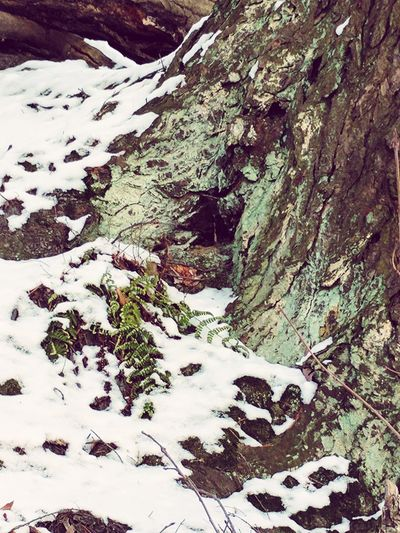 Winter Snow Nature Beauty In Nature Close-up Textured  Outdoors Greenery No People