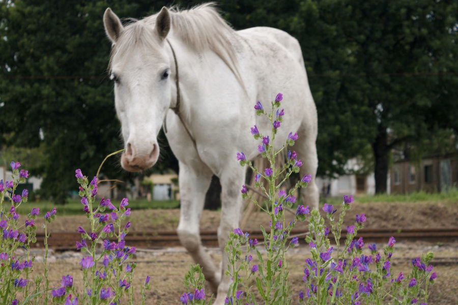 Animal Themes Day Domestic Animals Flower Focus On Foreground Freshness Horse Mammal Nature No People One Animal Outdoors Plant
