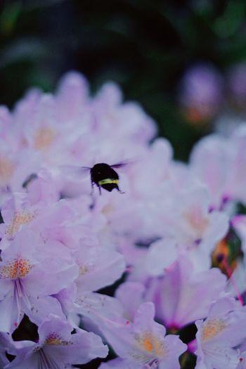 Bee Bee Animals