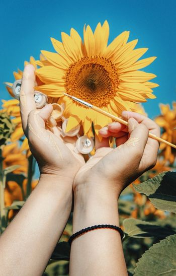 Close-up of hand holding sunflower