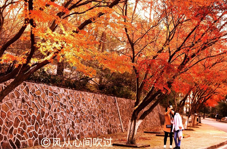 Autumn Tree Orange Color Two People Change Nature Full Length Leaf Outdoors Adult Adults Only Young Adult Beauty In Nature People Young Women Day Togetherness