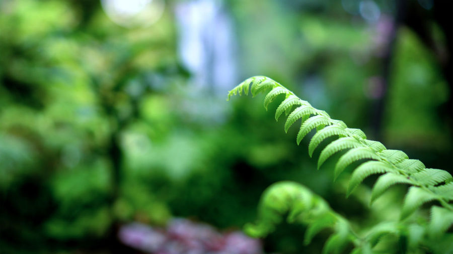 Close-up of fern leaves in forest