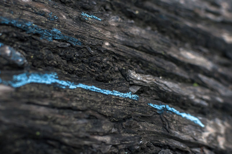 Blue Blue Line Close Up Close-up Nature No People Textured  Wood - Material