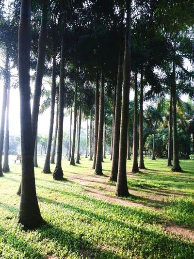 So peaceful! :) Trees Peaceful Peace And Quiet Miniforest For The Love Of Trees ~ Green Naturelovers EyeEm Nature Lover