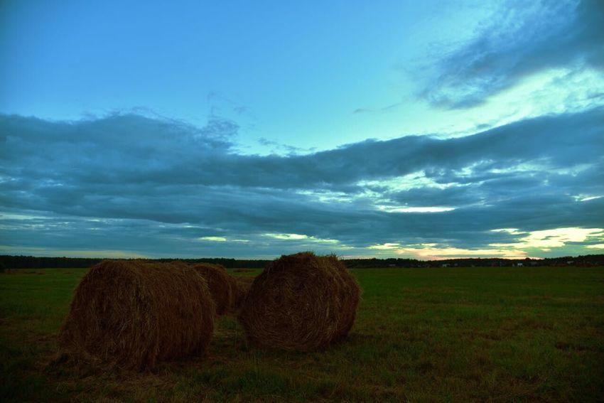Sunset Grass Green Grass Summer Evening Summer Country Life