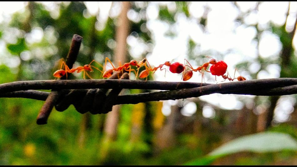 Special👌shot Ants World Nature Collecting Food