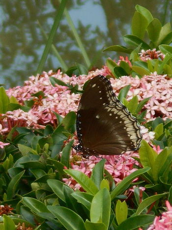 Animal Themes Beauty In Nature Butterfly And Flowers Close-up Day Flower Flower Head Freshness Leaf No People One Animal Outdoors Pink Color Plant Tree