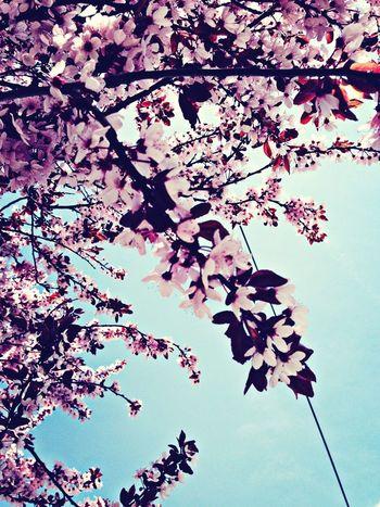Flowers At Springtime
