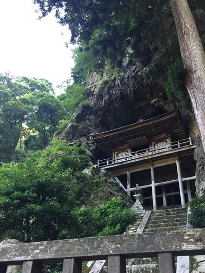 不動院岩屋堂 fudouiniwayadou Built In The Rock Tottori Prefecture 若桜町 鳥取県 不動院岩屋堂 Tree Plant Architecture Built Structure Growth Building Exterior Nature No People Low Angle View Belief