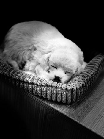 Dog One Animal Domestic Pets Dog Animal Themes Canine Mammal Animal Domestic Animals Indoors  Sleeping Relaxation Lying Down Eyes Closed  Summer Exploratorium Visual Creativity