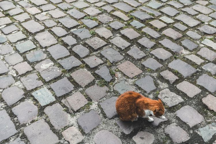 High Angle View Of Cat Licking Leg On Cobblestone Street