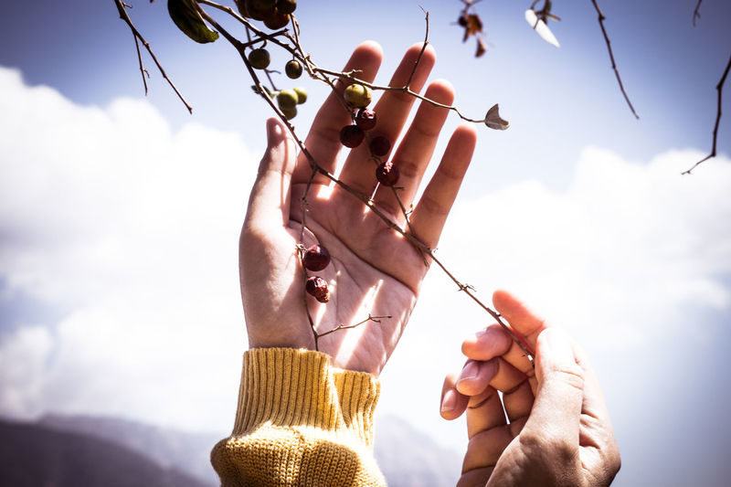 Close-up of hand picking fruit on plant against sky