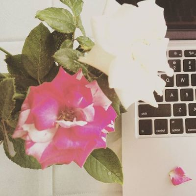 Photoproject365 365photochallenge August2015 Clovewebstudio Day 34 of 365 - The Roses are blooming again Flowers Pink