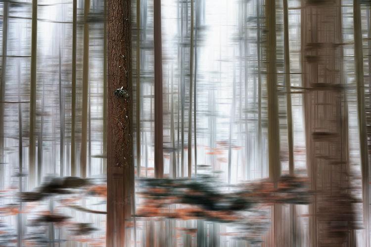 Defocused image of tree by building