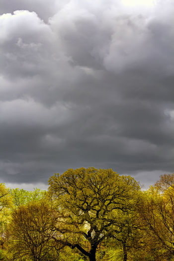 Low angle view of yellow tree against cloudy sky