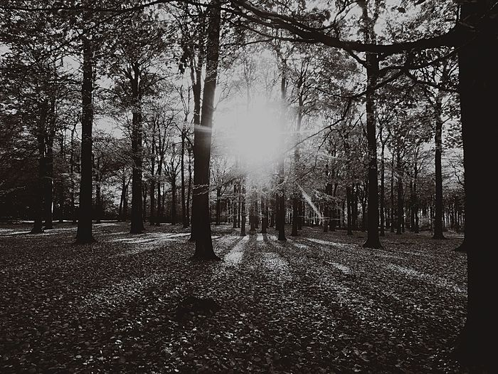 Forest In Black And White Tree Tranquility No People Nature Day Outdoors Bare Tree Beauty In Nature Sky Black And White Friday