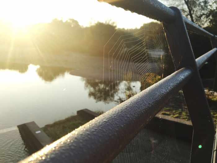 Morgensonne im Spinnennetz am Flaucher, Isar, Spider Macro Sunlight And Shadow Spider Web Spider Silk Spinnennetz Water Lake Nature Sunlight Day Reflection No People Architecture Lens Flare Beauty In Nature