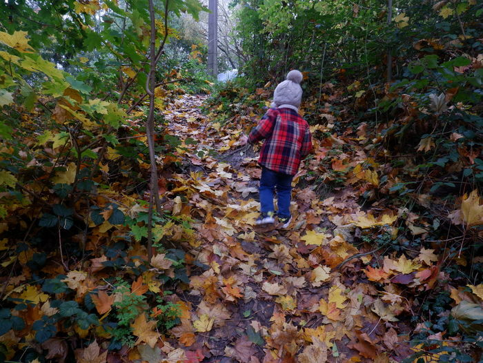 Rear view of man walking on autumn leaves