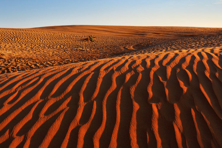Dubai desert texture Dubai Arid Climate Beauty In Nature Clear Sky Climate Day Desert Environment Focus On Shadow Horizon Over Land Land Landscape Nature No People Non-urban Scene Outdoors Pattern Remote Sand Sand Dune Scenics - Nature Sky Texture Tranquil Scene Tranquility