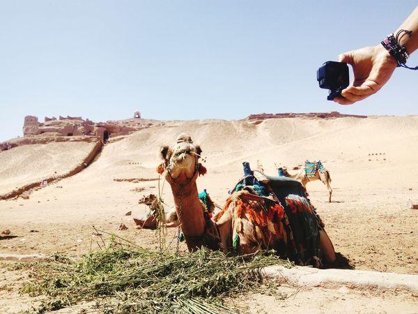 GoProhero6 Sand Dune Desert Men Clear Sky Sand Arid Climate Adventure Sky Working Animal Camel Visual Creativity Going Remote The Street Photographer - 2018 EyeEm Awards The Great Outdoors - 2018 EyeEm Awards The Traveler - 2018 EyeEm Awards The Creative - 2018 EyeEm Awards A New Beginning