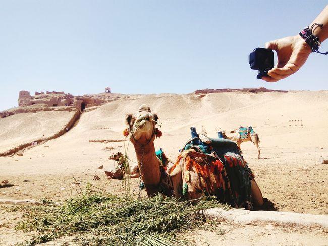 GoProhero6 Sand Dune Desert Men Clear Sky Sand Arid Climate Adventure Sky Working Animal Camel Visual Creativity Going Remote The Street Photographer - 2018 EyeEm Awards The Great Outdoors - 2018 EyeEm Awards The Traveler - 2018 EyeEm Awards The Creative - 2018 EyeEm Awards