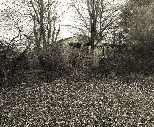 Winter old shed and trees Creepy