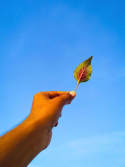Person holding leaf against blue sky