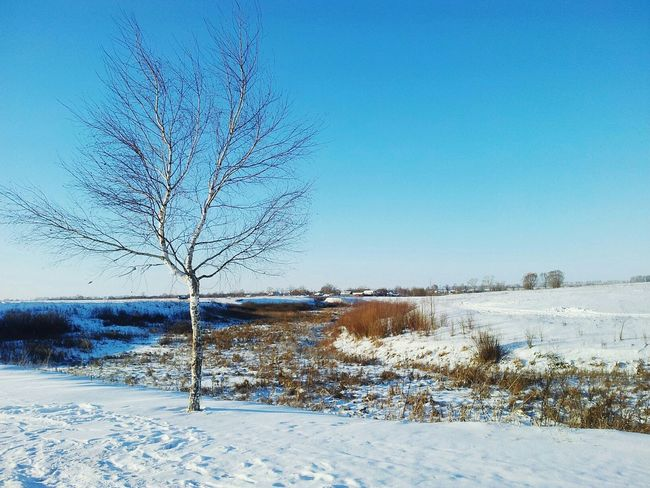 First Eyeem Photo Winner Blue Sky Snow Tree Future