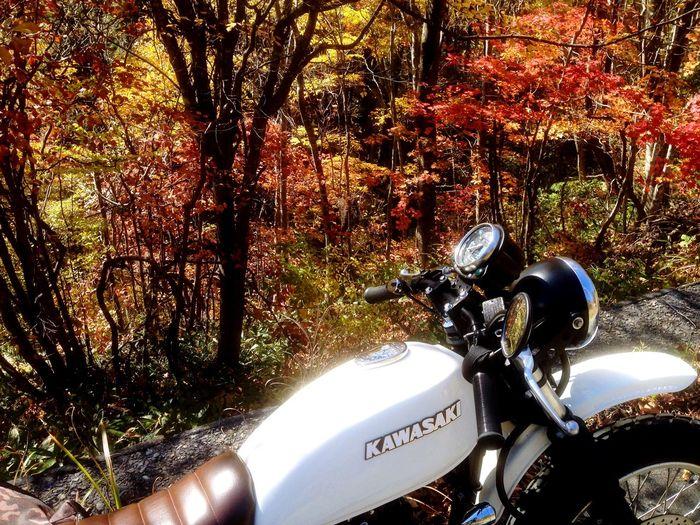Enjoying The Sun Kawasaki Mountain Road Bike Ride Monster もみじ 紅葉とか桜とかいつからか、見上げるものだと思っていた。 いつか辿り着く場所
