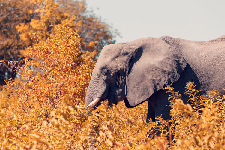Elephant standing amidst plants
