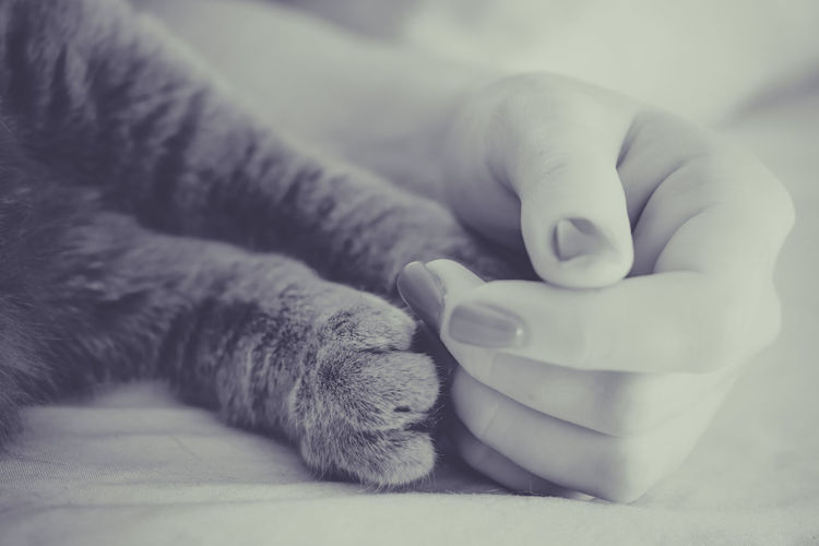 Cropped Image Of Woman Hand With Cat Legs On Bed