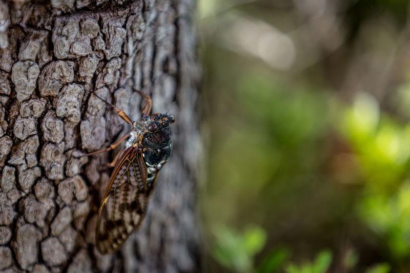 A cicada on a