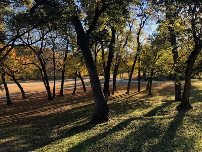 Park in dallas Park - Man Made Space Spring Scenics - Nature Tree Trunk Tranquility Shadow Light And Shadow Fall Beauty Sunlight Outdoors No People Tree Plant Growth Nature Beauty In Nature Trunk Park Tranquil Scene Land Day Grass Field