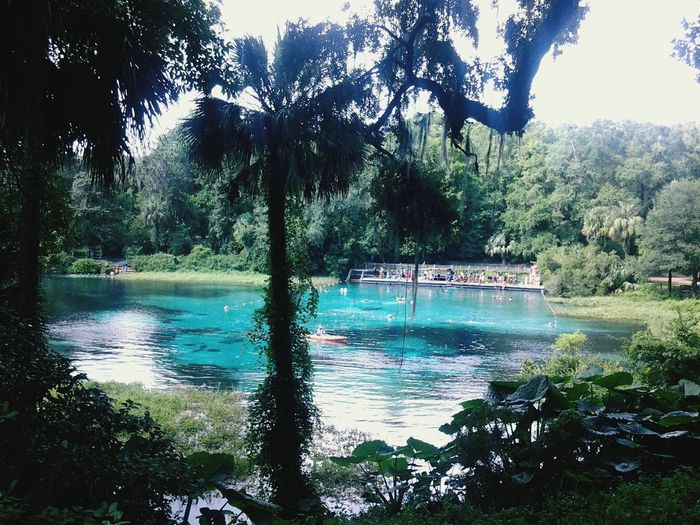 Been There. Rainbow Springs, Florida. Beautiful Crystal clear waters work natural beauty. Tree Water Nature Lake Day Beauty In Nature Reflection Growth Outdoors Scenics Tranquility No People Swimming Pool Sky