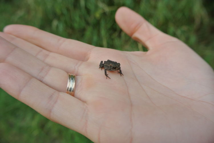 Baby Toad Baby
