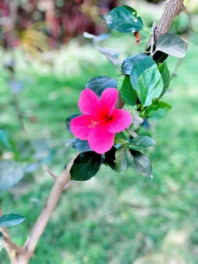 Flower Growth Nature Beauty In Nature Fragility Petal Plant