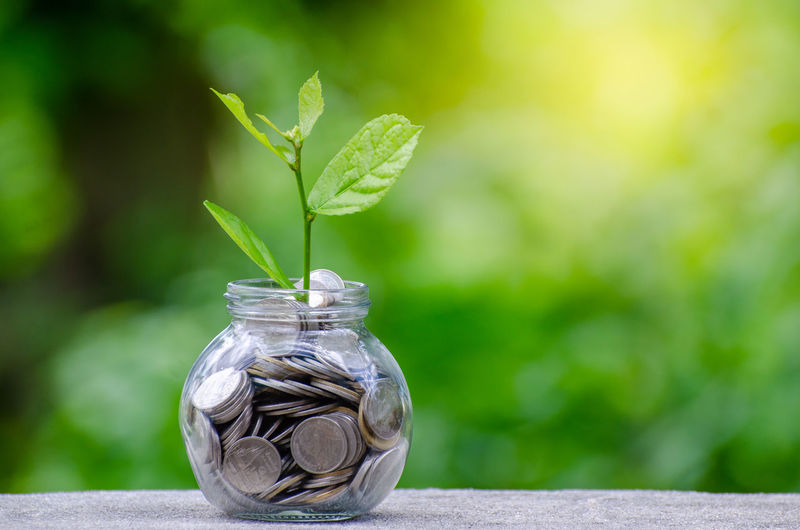 Money Money Money Close-up Coin Container Currency Day Finance Finance And Economy Focus On Foreground Glass - Material Green Color Growth Jar Leaf Making Money Money Nature No People Outdoors Plant Plant Part Saving Money Savings Transparent Wealth