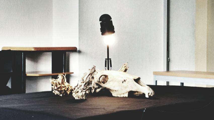 EyeEm Selects Art Art Class Skull Animal Skull Skulls💀 Skull Art Painting Drawing Bones💀🔫 Tattoo Dark Art Death Mexico City Taking Photos Drawing ✏ Craneos Tattooart Art, Drawing, Creativity Anatomy Animal Bone Animal Skeleton Day Drawing Process New Project