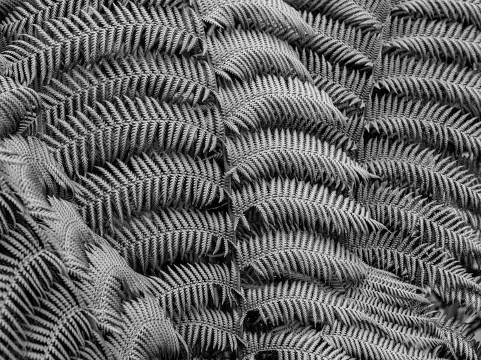 New Zealand tree fern Abstract Backgrounds Blackandwhite Close-up Fern Fragility Nature Pattern Textured