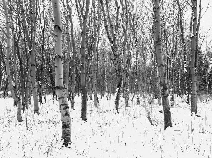 Black and white depiction of trees in snow Trees Bare Tree Beauty In Nature Black And White Cold Temperature Day Nature No People Outdoors Seasons Snow Tranquility Tree Winter