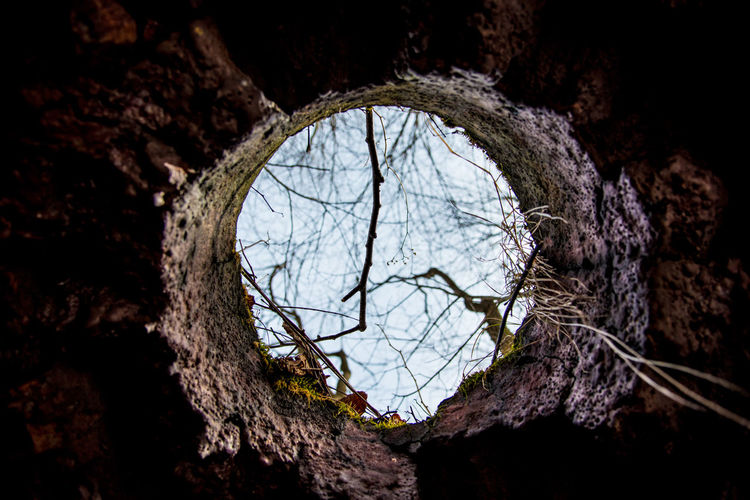 Low angle view of tree seen through hole