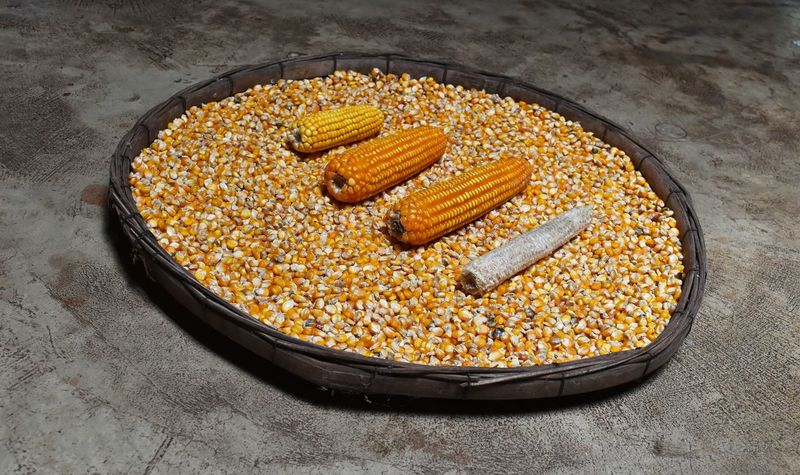 Farm Rural Countryside Thailand ASIA Corn Cob Yellow Orang Seed Seeds Basket Bamboo Old Ground Floor Cement Concrete Dirt Dirty Agriculture Objects Object Four Vintage Retro Food And Drink Food Freshness Day